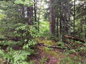 Lot Renfrew Road, Nine Mile River (MLS 201802270)