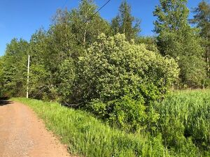Lot 80-1 Nelson Road, Shubenacadie (MLS 201826394)