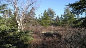 Lot 9 106 Ashley Court, Hubley (MLS 201911534)