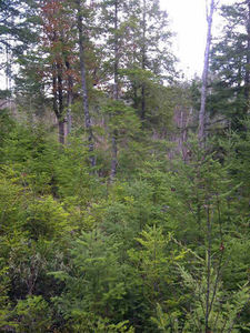 Lot 413 Highway 2, Oakfield (MLS 4716322)