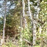 Lot 3 Glenville Road (202013623)